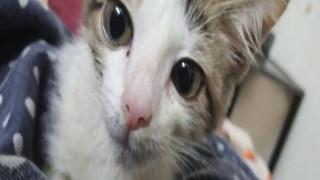 Kinh hãi chàng trai 15 tuổi và đám bạn hiếp dâm mèo cho đến chết ở Pakistan