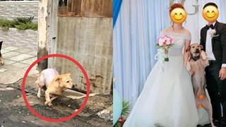 Chó cưng đuổi làm cô gái ngã xe, chàng trai bất đắc dĩ phải đưa đi viện, tự nhiên có vợ nhờ Boss