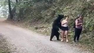 """Gấu đen bị thiến sau khi vô tư """"đụng chạm"""" nữ du khách trẻ"""