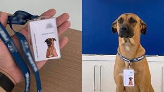Chú chó được hãng ô tô tuyển dụng đã thăng chức làm chuyên viên tư vấn