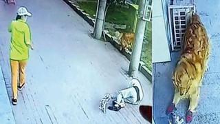 Đang đi thì mèo rơi trúng đầu, người đàn ông gãy cổ phải nhập viện