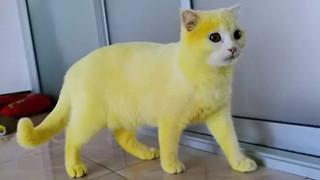 Boss bỗng hóa vàng khè như Pikachu sau khi được sen trị nấm bằng liệu pháp đặc biệt, dân mạng được một trận cười nghiêng ngả