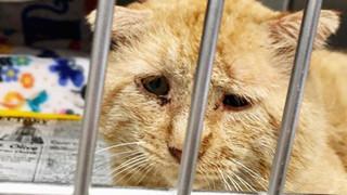 Bất chấp lời khuyên can, cô gái nhận nuôi chú mèo mặt buồn rười rượi và sự thay đổi ngoạn mục sau một năm khiến ai cũng trầm trồ
