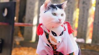 Chú mèo chuyên cosplay các nhân vật anime nổi tiếng, sở hữu 16 nghìn fan trung thành ngồi hóng ngày đêm