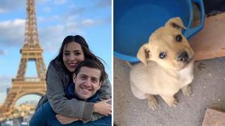 Cặp đôi lên mạng nhận nuôi hàng chục chú chó đáng thương lấy nước mắt dân mạng nhưng thật ra là đem cho làm thức ăn cho rắn
