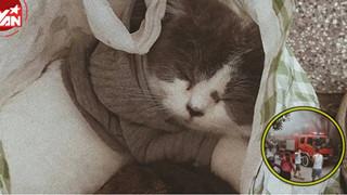 Chung cư báo cháy, chàng trai chỉ nhớ mang theo bốn chú mèo đang ngủ