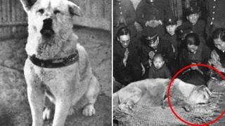 Những bức ảnh hiếm hoi về Hachikō - biểu tượng trung thành của người Nhật khiến người xem cảm tưởng câu chuyện đau lòng ấy đang diễn ra trước mắt