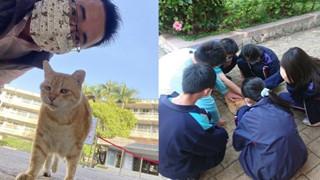 Mèo Béo A Phì lên làm phó hiệu trưởng của trường học tại Đài Loan - Nhiệm vụ chính là ăn, ngủ và phơi bụng cho cả trường yêu thương