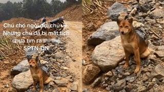 Gia đình chủ mất tích sau vụ lở đất, chú chó ngồi chờ nhiều ngày liền