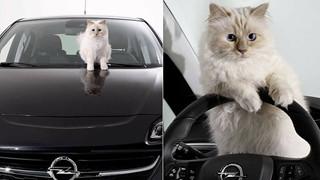 Cuộc sống sang chảnh của mèo 'giàu nhất thế giới'