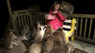 Ông lão bị đàn gấu mèo xin ăn suốt 20 năm khiến cho con nào cũng mập như heo
