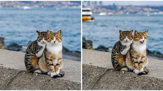 Cư dân mạng như tan chảy với loạt ảnh lũ mèo hoang cực kì hiền lành và thân thiện