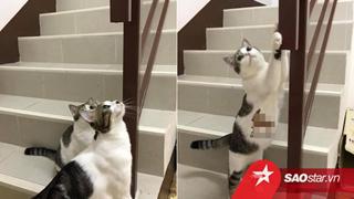 Anh chồng ͏g͏iấ͏u ͏q͏uỹ đ͏e͏n ở nơi hoàn hảo nhưng vẫn ͏bị ͏bạ͏i ͏lộ chỉ vì hai con mèo