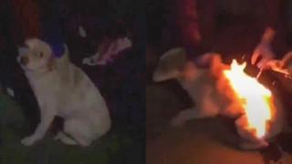 Video chú chó bốc cháy như ngọn đuốc sống lan truyền chóng mặt trên MXH, cảnh sát điều tra mới biết trò đùa man rợ của đám trẻ con