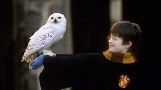 Những Fact siêu thú vị ít người biết về thương hiệu Harry Potter (P1)