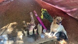Sau 1 tháng sạt lở Trà Leng, chó mẹ và đàn con vẫn ở bên mộ chủ khóc, bỏ ăn, đuổi không đi
