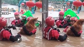 CĐM cười bò vì anh lính cứu hỏa cứu chú chó vượt lũ bằng thùng rác