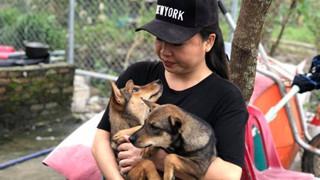 Đà Nẵng: Người phụ nữ bán nhà, cưu mang gần 100 chú chó, mèo bị bỏ rơi