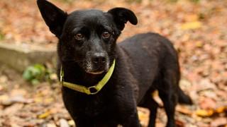 Chú chó mù đi 30 km tìm về với chủ cũ