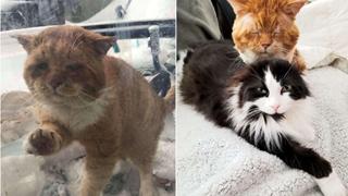 Chú mèo hoang liên tục gõ cửa kính và kêu khóc để van xin hooman cho vào nhà giữa thời tiết lạnh giá