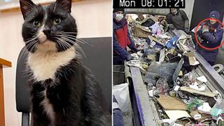 Mém bị giết bởi máy nghiền rác, chú mèo hoang trở thành Thứ trưởng Môi trường trong đúng một nốt nhạc
