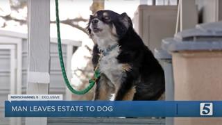 """Góc """"rich dog"""": Chú chó được thừa kế 115 tỷ đồng khi chủ nhân qua đời"""