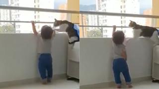 Clip: Chú mèo ngăn cháu bé trèo ra ban công chung cư cao tầng