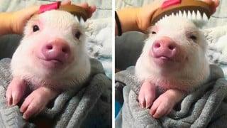 20 bức ảnh hạnh phúc giản đơn của nhưng con vật cưng khiến bạn có 1 đầu tuần nhẹ nhàng vui vẻ