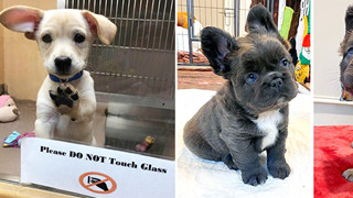 20 hình ảnh cho thấy cún con là giống loài dễ thương như thiên thần khiến bạn muốn nựng mãi không thôi