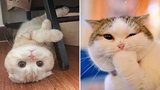 Tổng hợp hình ảnh những chú mèo cực dễ thương khiến cho trái tim bạn phải tan chảy