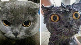 20 hình ảnh động vật khi được tắm sẽ hiện nguyên hình là những tiểu yêu quái cực dễ thương