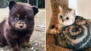 15 hình ảnh khoảng khắc kỳ lạ của thú cưng khiến bạn dễ nhầm tưởng thành 1 sinh vật khác