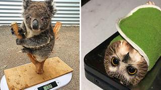 15 hình ảnh cho ta thấy việc đo cân nặng của động vật cũng là 1 trò chơi nghệ thuật thú vị