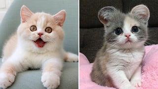 Tổng hợp hình ảnh những bé mèo con cute khiến bạn chỉ bưng lên giường ôm ngủ cho hết ngày dài