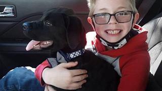 Cứu chú chó khỏi bệnh hiểm nghèo - cậu bé 8 tuổi bán bộ sưu tập thẻ bài Pokemon để trả tiền phẫu thuật cho bé