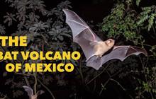 Kinh hoàng ngọn núi lửa phun ra hàng triệu con dơi mỗi đêm