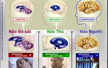Não Bò Sát, Não Thú và Não Người là gì? Bạn biết gì về  thuyết 3 não được VTV nêu ra