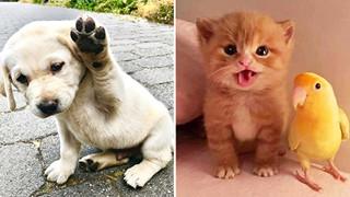 18 bằng chứng cho thấy các bé động vật khi còn nhỏ đều rất dễ thương và được các con sen yêu mến hết mực