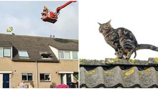 Mèo lên nóc nhà rồi không xuống được, Sen liền kêu cứu hỏa tới cứu nhưng hóa ra là nó đang chuẩn bị đi nặng