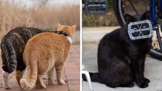 40 bức hình cực đáng yêu các bé mèo hoang tại Nhật bản khiến cho bạn cảm thấy hạnh phúc