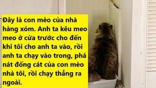 23 bằng chứng cho thấy mèo là cái loài thích ăn Pate của sen nhưng mà lại mê máy lạnh nhà hàng xóm