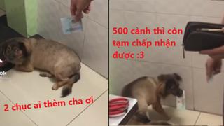 Clip độc khi chú chó được ba cho tiền để ngủ chung: Tiền phải lớn mới chịu lấy đó nha
