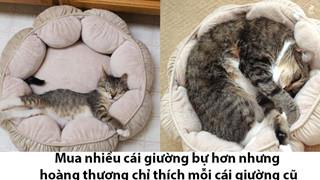 17 bé chó mèo lớn nhanh như thánh Gióng khiến cho các con sen phải bất ngờ