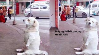 Đáng yêu kinh khủng chú chó ngồi ăn vạ vòi chủ nhân phải mua cho được 2 cái đùi gà