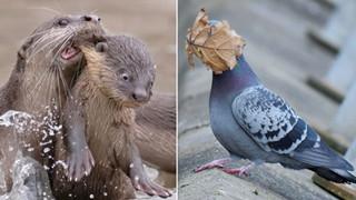 Tổng hợp những hình ảnh các bé động vật hoang dã nhưng lại có cảm xúc vô cùng hài hước khiến bạn cười quên sầu