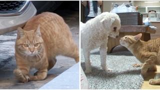 Bé mèo hoang bị liệt  2 chân kết thân với chú chó mất 1 tai trở thành gia đình hạnh phúc nhất quả đất