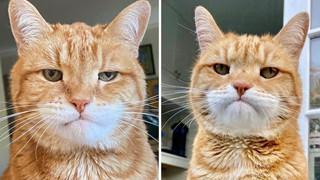 Gặp Marley - Chú mèo có bộ mặt luôn thất vọng và phán xét nhất quả đất
