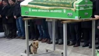 Chú chó mãi mãi ở bên mộ phần của chủ đã trở thành biểu tượng của sự trung thành
