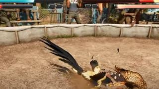Tổ chức động vật thế giới yêu cầu Ubisoft loại bỏ trò chơi đá gà ra khỏi Far Cry 6